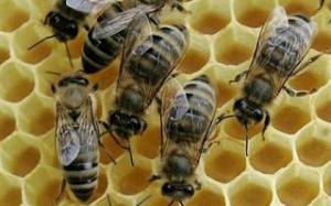 20.5.2014_στήριξη της μελισσοκομίας