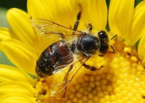 14.7.2014_Μέλισσα