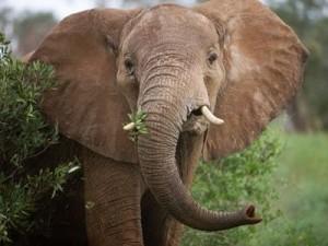 7.7.2014_Ελέφαντας απελευθερώνεται έπειτα από 50 χρόνια σκλαβιάς