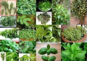 13.8.2014_Ανοίγει ο δρόμος για τη δημιουργία εθνικού καταλόγου αρωματικών φυτών