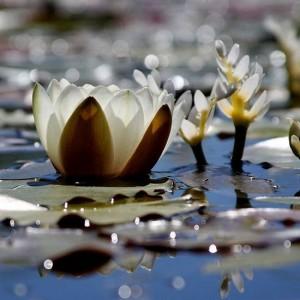 27.8.2014_Λύπη, θυμός και δύσκολα συναισθήματα  πώς να τα χειρίζεσαι