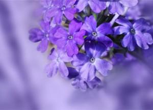 16.9.2014_Στο εναλλακτικό μικροσκόπιο η λουίζα