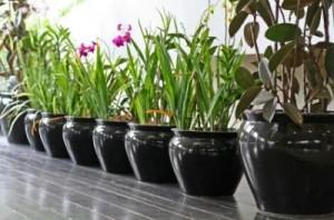 4.9.2014_Τα φυτά στο χώρο εργασίας αυξάνουν την παραγωγικότητα