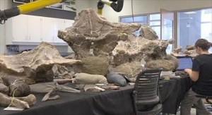6.9.2014_Ανακαλύφθηκε ο σκελετός του μεγαλύτερου δεινοσαύρου