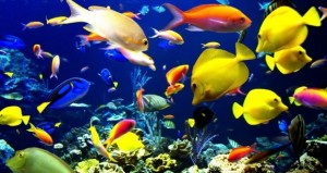 21.10.2014_Τα ψάρια διασκεδάζουν παίζοντας, δείχνει νέα μελέτη