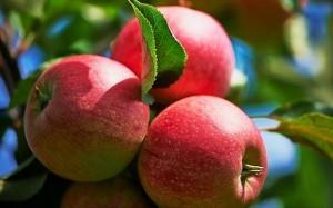 24.10.2014_Δημιουργήθηκε μήλο «με ανθρακικό»
