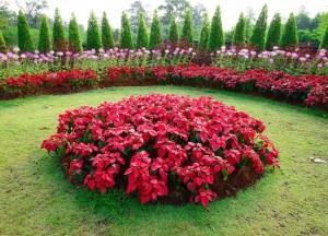 30.12.2014_Φυτά και λουλούδια με άρωμα Χριστουγέννων