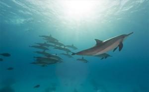 19.1.2015_Τα δελφίνια και οι φώκιες έχουν καρδιακές αρρυθμίες