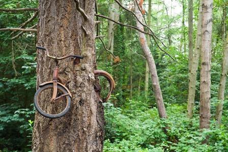 Δέντρο έχει... φάει ένα ποδήλατο στο Vashon Island στην Ουάσινγκτον.