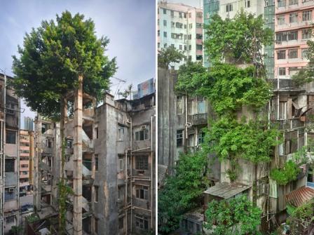 Τα δέντρα νικούν το τσιμέντο στο Χονγκ Κονγκ.