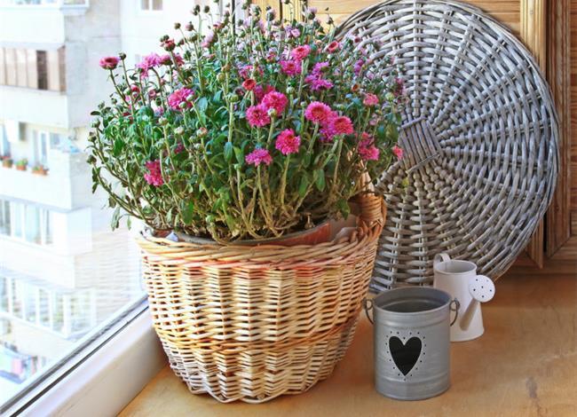 31.3.2015_Τα φυτά που καθαρίζουν το σπίτι σας