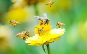 27.4.2015_Οι μέλισσες εθίζονται στα φυτοφάρμακα