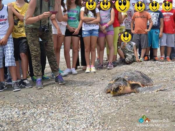 16.6.2015_Απελευθέρωση θαλάσσιας χελώνας Caretta caretta στο παράλιο Άστρος_2