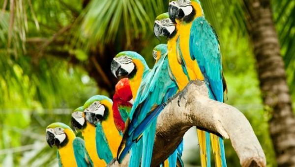 27.6.2015_Αποκωδικοποιήθηκε ο μηχανισμός ομιλίας των παπαγάλων;