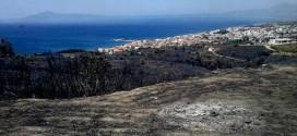 Υποβολή δηλώσεων για τις ζημιές στις ελιές από την πυρκαγιά στα Βάτικα