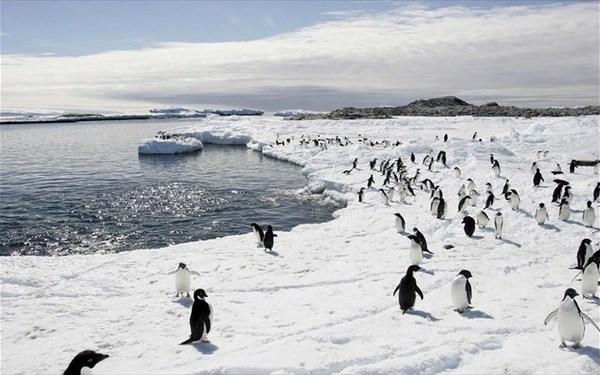 15.2.2016_πιγκουίνοι