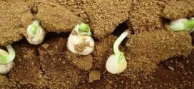 Φυτά καλλιεργήθηκαν με επιτυχία σε προσομοιωμένο χώμα από τον Άρη