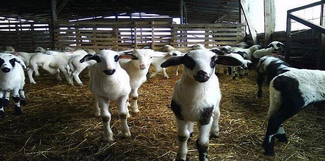 9-9-2016_Λήγει την Δευτέρα η προθεσμία αδειοδότησης των κτηνοτροφικών εγκαταστάσεων