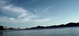 Drone – «θαλασσοπούλι» που μπορεί να βουτά από τον αέρα στο νερό
