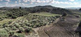 Παρατείνεται έως τις 7 Σεπτεμβρίου η ανάρτηση των δασικών χαρτών
