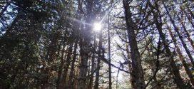 Δάση και ενέργεια στον Πάρνωνα – Παγκόσμια ημέρα Δασοπονίας 2017