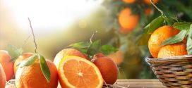 Πέντε πράγματα που δεν γνωρίζατε για τα πορτοκάλια