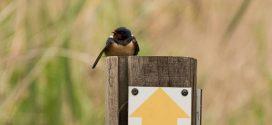 Δύσκολοι καιροί για τα μεταναστευτικά πουλιά