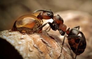 30.6.2014_Ο θαυμαστός κόσμος των μυρμηγκιών