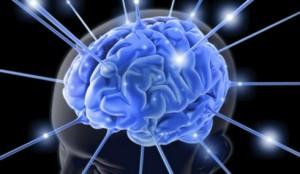 30.7.2014_Η περιοχή στον εγκέφαλο που «νιώθει» ότι κάτι κακό πρόκειται να συμβεί