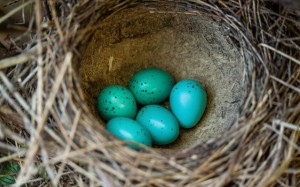 13.8.2014_Το κέλυφος των αυγών λειτουργεί ως «αντηλιακό»;