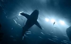 20.8.2014_Καρχαρίες επιτίθενται στις υποβρύχιες οπτικές ίνες της Google