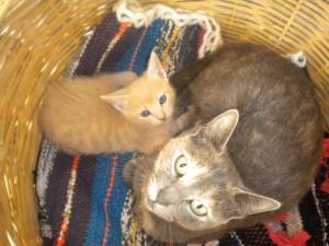 21.8.2014_Αποκωδικοποιήθηκε το DNA της κατοικίδιας γάτας