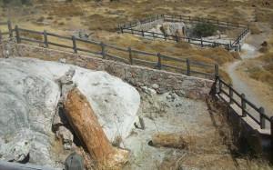 28.8.2014_Το απολιθωμένο δάσος Λέσβου διεκδικεί θέση στα μνημεία της Unesco
