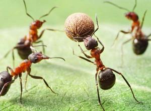 6.8.2014_Μπορούν τα μυρμήγκια να σταματήσουν την κλιματική αλλαγή;