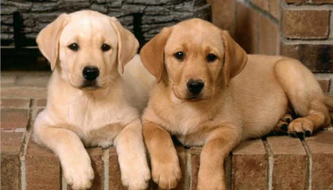 17.9.2014_Οι σκύλοι προτιμούν τα χάδια από τη λεκτική επιβράβευση