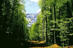18.9.2014_Χαρακτηρισμοί-εξπρές για δασικές εκτάσεις (ή μη)