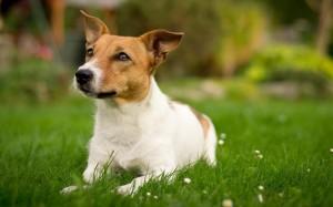 24.9.2014_Οι σκύλοι νιώθουν συναισθήματα απαισιοδοξίας