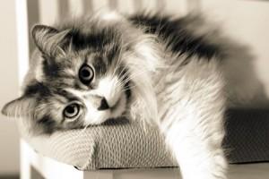 16.11.2014_Πότε και γιατί οι γάτες μπήκαν στα σπίτια των ανθρώπων;