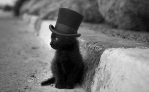21.11.2014_Μια γάτα που γνωρίζει ένα φοβερό μυστικό…