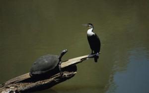 30.11.2014_Οι χελώνες και τα πτηνά είναι «συγγενείς»