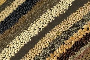 17.12.2014_Έρευνα οι σπόροι μαθαίνουν να αναγνωρίζουν τις εποχές