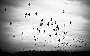 14.1.2015_Οι αλλαγές των βροχοπτώσεων η μεγαλύτερη απειλή για τα πτηνά