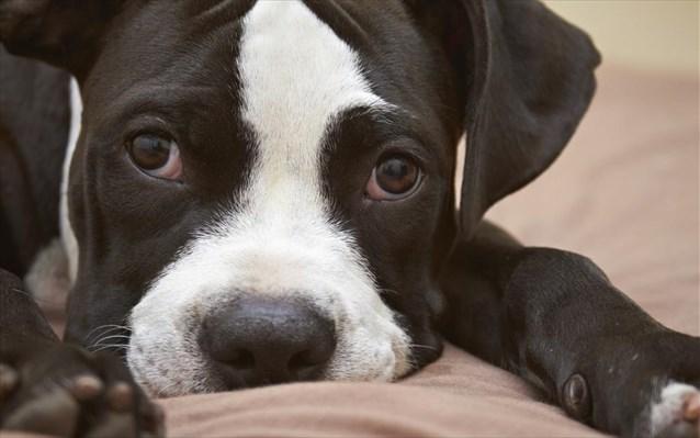 14.2.2015_Οι σκύλοι «διαβάζουν» τα συναισθήματα