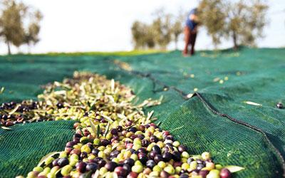 5.1.2015_Ο νέος τρόπος φορολόγησης του αγροτικού εισοδήματος