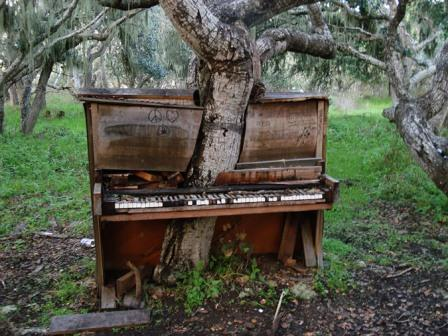 Πιάνο-δέντρο στην Καλιφόρνια .