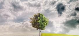 Σε συνέδριο για την κλιματική αλλαγή συμμετείχε ο Δήμος Ευρώτα