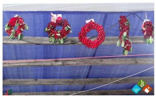 3.6.2015_Ιδιαίτερη επιτυχία σημείωση η Γιορτή Κερασιών στον Πλάτανο Κυνουρίας_2