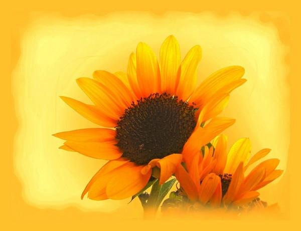 13.7.2015_Για μια ασφαλή θέση στον ήλιο