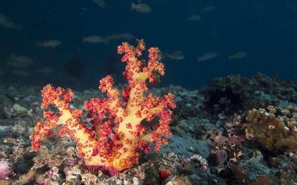 28.7.2015_Συνθετικά κοράλλια για τον καθαρισμό των ωκεανών