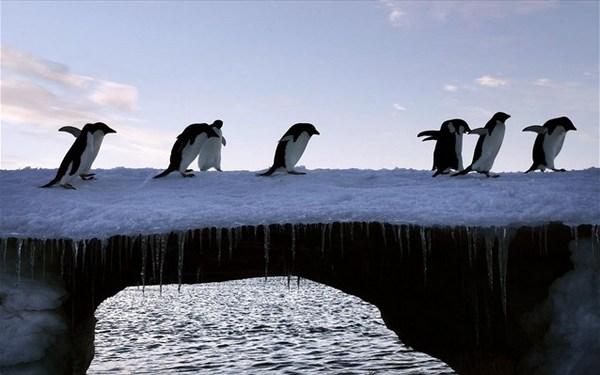 7.7.2015_Αναπάντεχα πλούσια η βιοποικιλότητα στην Ανταρκτική